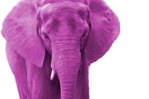 pink-elephant5